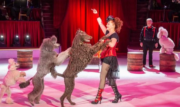 Cirku i Budapestit vjen për herë të parë në Tiranë